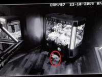 リアル・トイストーリーかな。UFOキャッチャーから勝手にぬいぐるみが飛び出す怪奇現象、その正体は?(イギリス)
