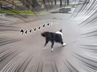 ウィィ~ン!これほどまでに石で楽しく遊ぶ犬を見たことがあっただろうか?