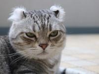 猫は少なくとも人間を人間と認識していない。むしろ同等と思っているふしがある(英研究)