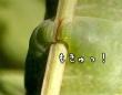 肉球レベル?脚だけ見れば相当かわいい、芋虫が小枝をつかむその脚にズームイン(※芋虫出演中)
