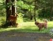 ねえねえ追いかけっこしよ!犬と鹿にいつのまにか芽生えた友情がファンタジーな光景を作り上げた
