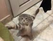 自ら囚われの身となった子猫。両前脚がロックオンされ捕虜状態に
