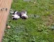 猫たちの初めてのお散歩。犬のようにはいかずふりまわされる飼い主(オーストラリア)