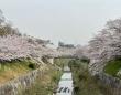 桜の名所に架かる橋(画像はイメージ)