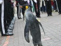 ペンギンがサッカーを猛練習中!?