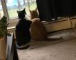 僕がついてるから大丈夫。雷雨におびえる猫に身を寄せて励ます猫(カナダ)