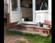 図々しすぎる! カモメが堂々と家の中に侵入し、猫のエサを食い荒らす。