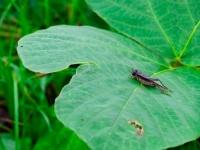 世界が注目する「昆虫食」で「コオロギ」が注目されるワケ(*画像はイメージです)