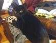 絶対ワザとだろ!人間の嫌がることをあえてやっているふしがある猫の所業ファイル(猫あるある)