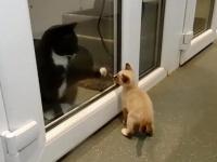 ガソリンスタンドに捨てられていた4匹の子猫。唯一生き残った1匹は施設の猫たちに愛を与える存在に(イギリス)
