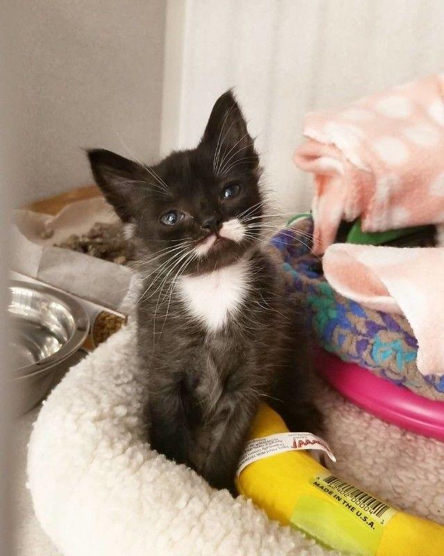 kitten-6 (1)