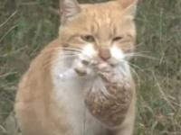 その場で餌を食べようとせず、ビニール袋に入れたエサだけを持ち帰る野良猫。そこには我が子を思う母猫の愛が。