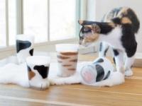 ネコのおててグラスで、ふにゃんとひとゆるみ #おしごと雑貨