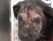 皮膚炎でボロボロ…殺処分寸前の犬を見捨てることはなかった。