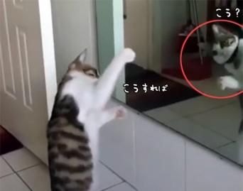 鏡の前でフォームをチェック?シャドーボクシングの練習に余念がない猫。
