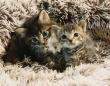 片時も離れず一緒にいた2匹の子猫の保護物語(アメリカ)