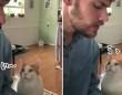 ピアノを弾く飼い主に猫がうっとり。思いっきり甘えてくるのはヒゲメンだからなのか?