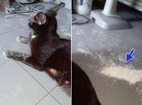 猫、ついに白い粉に手を出してしまう。その形相がやばいことに
