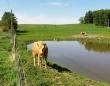 この人なら助けてくれるかも!我が子がフェンスに挟まってしまい人間に必死で助けを求めた母さん牛(カナダ)