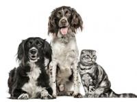 イヌやネコも認知症になるか?(depositphotos.com)