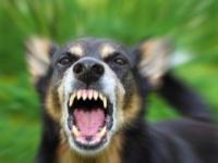 狂犬病ワクチンを接種している登録犬は71%(shutterstock.com)
