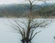 「スケキヨが出てきそう...」 静かな池にぽつんと佇む、寂しげな木の雰囲気が凄い