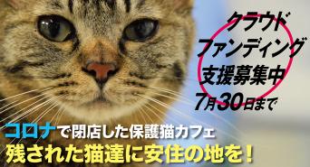 猫カフェブランのプレスリリース画像