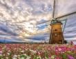 ここはオランダ?いいえ、千葉です 一面のコスモス畑の真ん中で、雲を切るような風車がCOOL