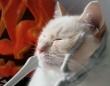 ハロウィンやし、こんなんどう?骸骨にモフられて恍惚の猫
