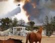 うれしいニュース。西海岸の森林火災に巻き込まれた馬全てが奇跡的に生き伸びる(アメリカ)