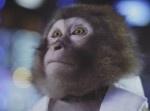 """恋するサルの抒情に泣ける… 大分市PR映像の""""猿の演技力""""が凄いと話題"""
