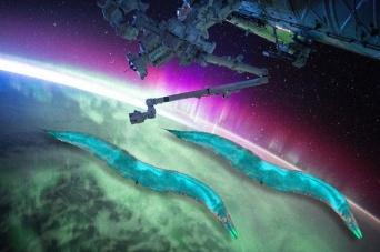 重力は遺伝子に影響を与える。宇宙に運んだ線虫の体内で多数の遺伝子が変化したことを確認(NASA)