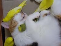 寝ていると鳥たちがあつまる止まり木としての猫