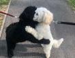 散歩中に偶然出会った犬2匹が突然ギュっと抱き合う不思議。なんと血のつながったきょうだいだった!(イギリス)