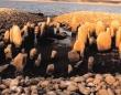 極度の干ばつで姿を現した約7,000年前のスペイン版ストーンヘンジ