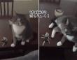 外出しようとすると毎回、鉄壁の防御で家の鍵を守ろうとする猫
