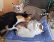 猫のぬいぐるみの生存確認を行っていた3匹の猫だが、まさかの仰天ハプニング