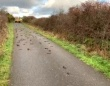 2百羽以上のムクドリが路上で謎の大量死。あれから2か月、その死因を解明か?(イギリス)