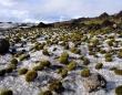 まるでネズミの群れのよう。氷河の上を群れで移動する緑色の「氷河ネズミ」の正体は?(アラスカ)