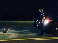 なんで職質されなあかんのや?道路に出没したニワトリ、警察の職質に非協力的な態度を見せる(アメリカ)
