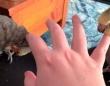 片手で2羽のオカメインコを愛でるには?「両手に花」ならぬ「両指に鳥」の極上あったかタイムをどうぞ