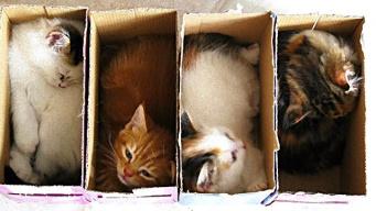 「収納容量を超えました」キャパオーバーでも気にしない、入りたい猫たち総集編