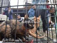 男の自宅から保護された猫たち(出典:「成都商報」)