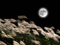 巡り巡って満月タイム。9月の満月は中秋の名月と同じ21日にやってくる!