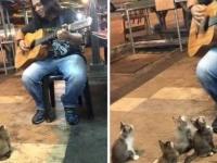 ストリートミュージシャンの一番のファンは4匹の子猫たち。目の前に座って演奏のおねだり(マレーシア)