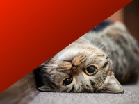(C)GreenArt / Shutterstock