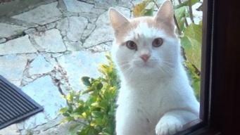 またしても特殊技術を持つ猫が。「朝ごはんくれや」と見つめ続ける猫の眼差し