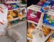 寂しげにたたずむ野良猫に近づいたら店の中に導かれ、お目当てのキャットフードに案内された(メキシコ)