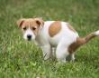 なぜ犬はうんちっちをする前にグルグル回るのか?体を地球の磁場に合わせていたことが判明(共同研究)
