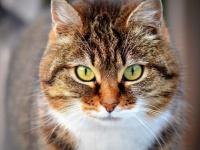 オーストラリアでは、猫の夜間外出禁止・地域により「1世帯2匹まで」の規制条例が2020年より施行される